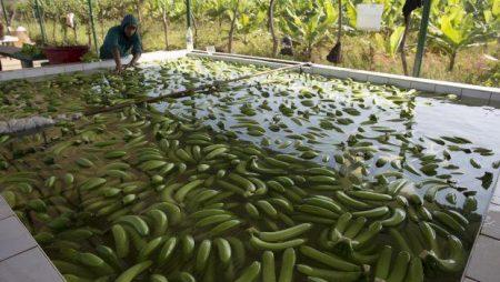 Agricultura en ambiente controlado, solución a cambio climático en América Latina